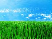 Prado con un pasto verde — Foto de Stock