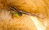 Lizard in a straw hat — Stock Photo