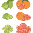 Set of lime and grapefruit slices - Stock Vector