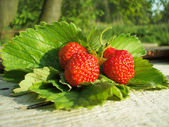 Fresh strawberry on the leafs — Stock Photo