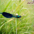 Big dragonfly on stalk - Stock Photo