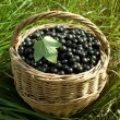 Fresh black currant berries — Stock Photo
