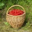 Bucket with fresh red currant — Stock Photo