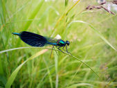 Big dragonfly on stalk — Stock Photo