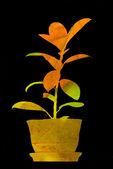 秋天的想法: 一种植物在花盆里. — 图库照片