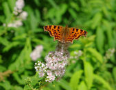The butterfly — Stockfoto