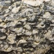 Stock Photo: Stone surface 4