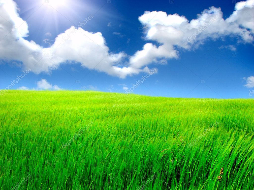 Meadow and summer blue sky landscape  Stock Photo #1296529