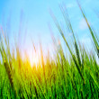 High grass and sky — Stock Photo