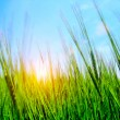 Royalty-Free Stock Photo: High grass and sky