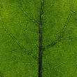Leaf close up - Stock Photo