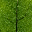 Leaf close up — Stock Photo #1326921