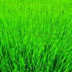 Gras Hintergrund — Stockfoto