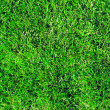 Foto Stock: Grass background