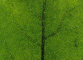 Leaf close up — Stock Photo