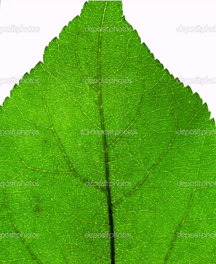 Extreme close-up of the green leaf texture — Stock Photo #1327302