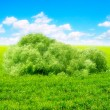 Royalty-Free Stock Photo: Bush in the fields