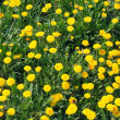 Dandelions — Stock Photo #1332411