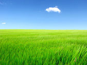 Summer field landscape — Stock Photo