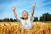 Kid in wheat field — Stock Photo