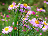Flowers and bee — Stock Photo