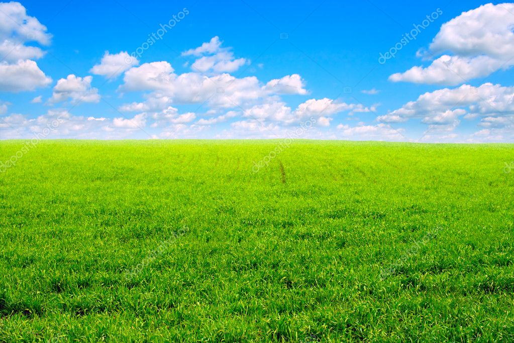 Nature background with fresh grass and sky  Foto de Stock   #1330762