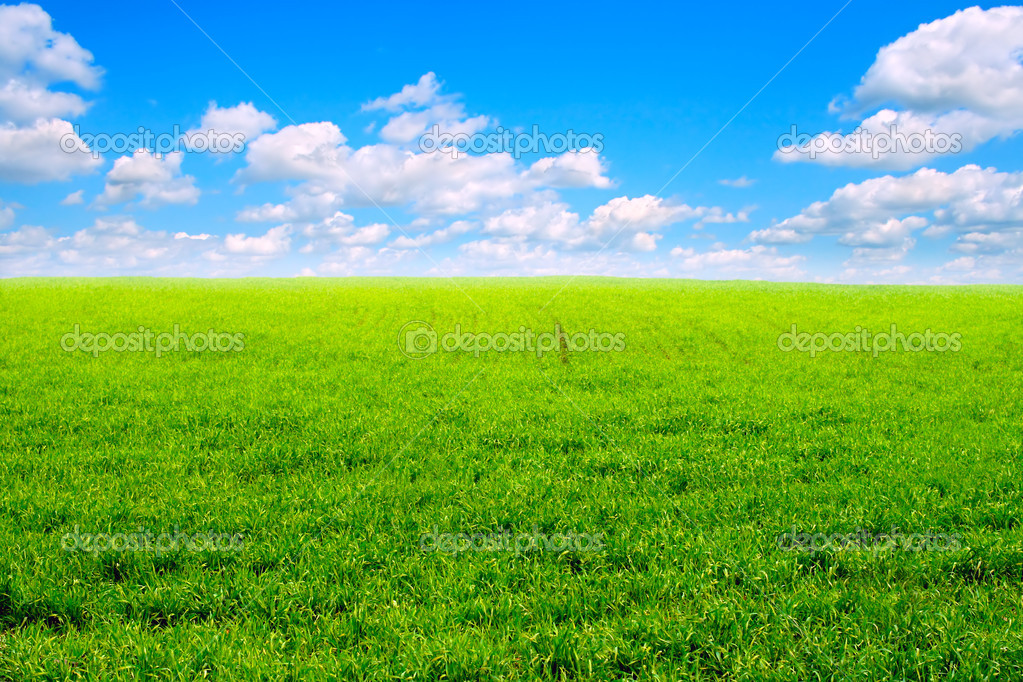 Nature background with fresh grass and sky  Stock Photo #1330762