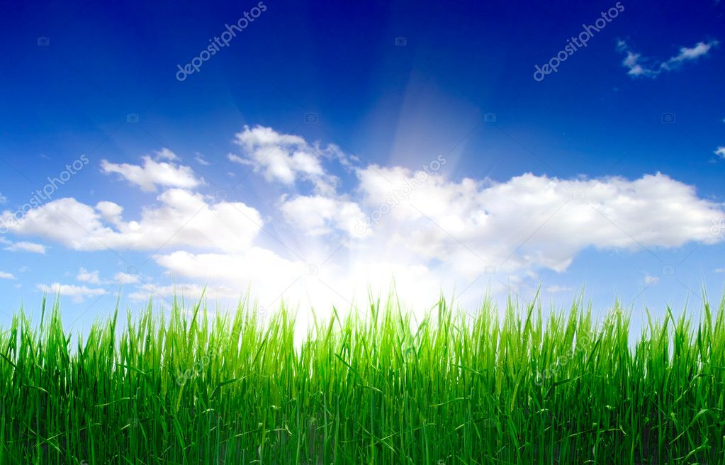 Фотообои High grass and sky