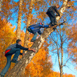 Stok fotoğraf: Boys on the tree