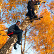 Boys on the tree — Stok fotoğraf
