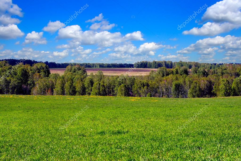Landscape with green fields and forest — Stock Photo #1733078