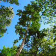 Trees looking up — Stock Photo
