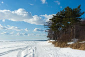 The Gulf of Finland coast in early sprin — Stock Photo