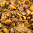 Stock Photo: Broiled chanterelles