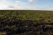 Ploughed chernozem (black earth) field — Stock Photo