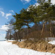 Coast of Finland Gulf in early spring — Stock Photo