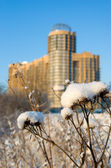 Snow-covered thistle — Stock Photo