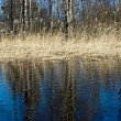 Spring landscape, Vuoksi river — Stock Photo