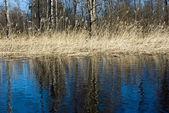Spring landscape, Vuoksi river — Stock Photo