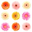 Different colour gerberas — Stock Photo
