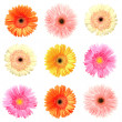 Stock Photo: Different colour gerberas