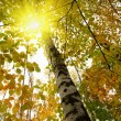 Golden autumn — Stock Photo #1304407