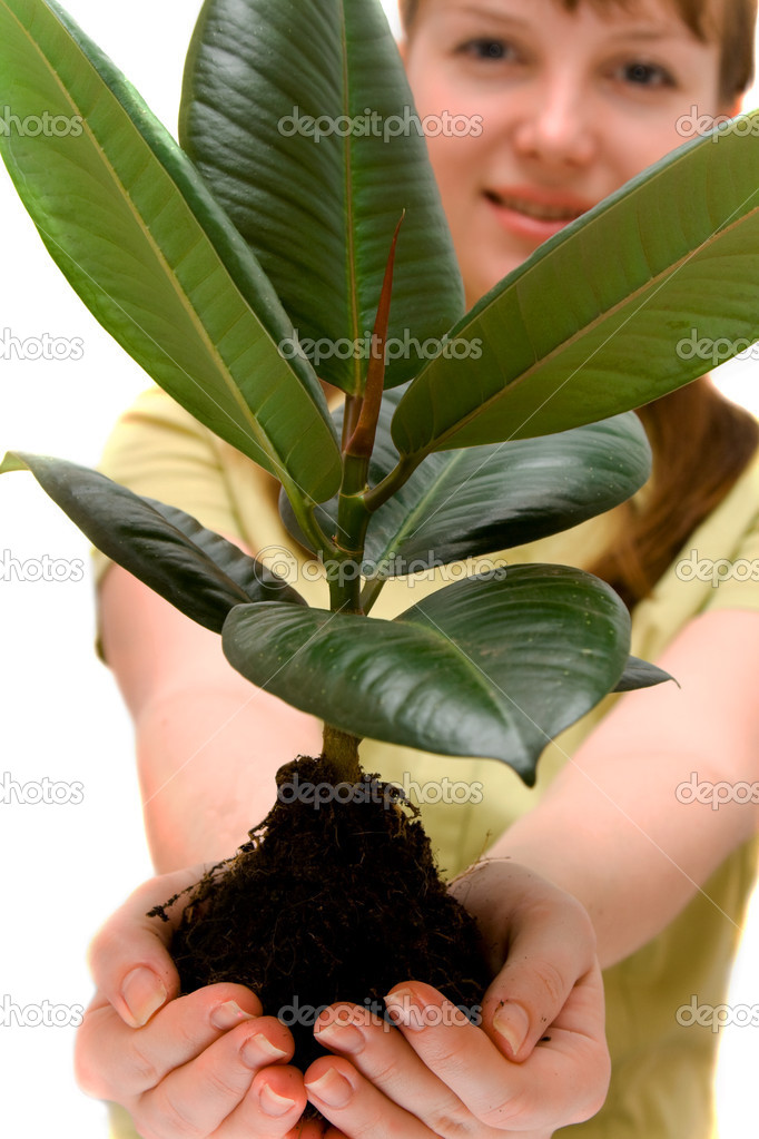 Pretty woman is holding small rubber tree in the hands — Stock Photo #1304822