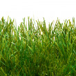 Foto Stock: Green grass