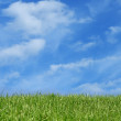 Grass field over blue sky — Stock Photo