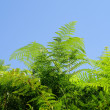 Colorful green fern — Stock Photo