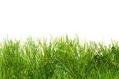 绿色葱郁人工草 — 图库照片