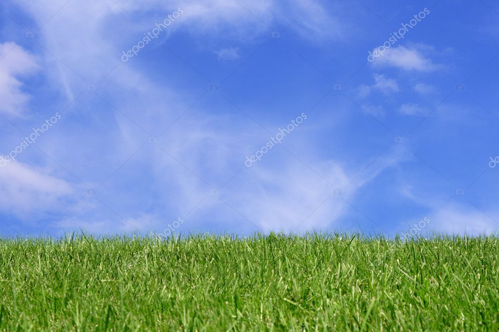 Green grass field over blue sky background  Stock Photo #1402304