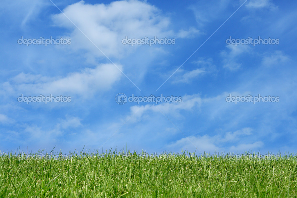 Green grass field over blue sky background — Stock Photo #1402309