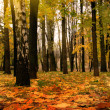 Foto Stock: Golden autumn, Indisummer
